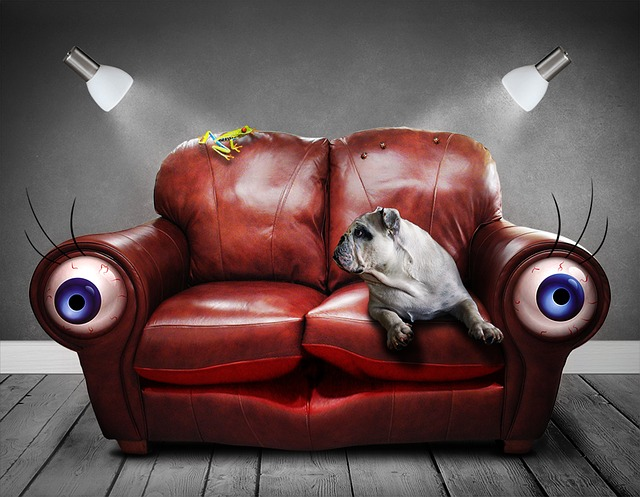 bulldog on a red couch