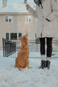 Attentive dog with its owner on snow.
