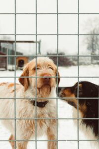 Two dogs inside a fence.